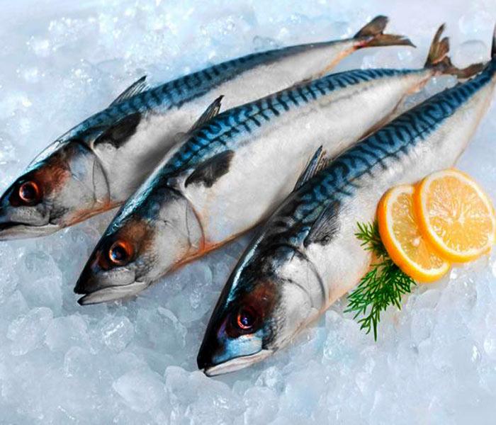 Chọn cá thu tươi ngon cho món ruốc chất lượng